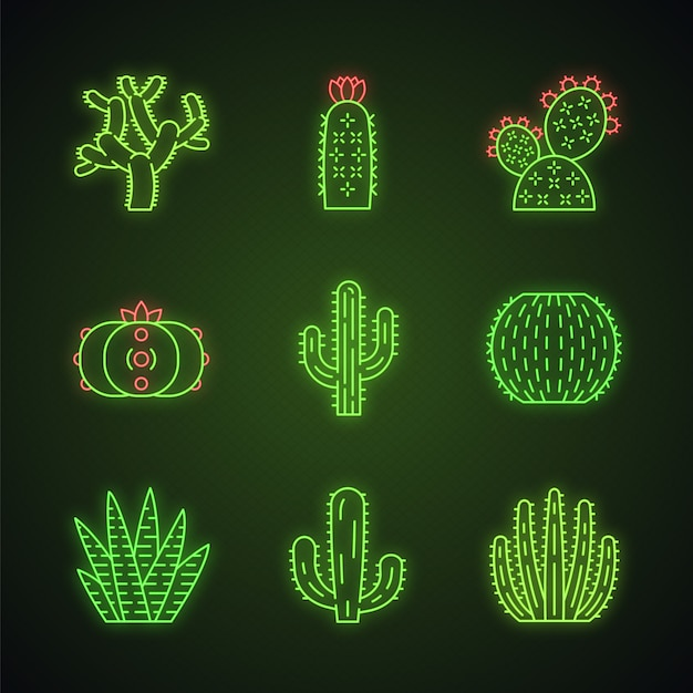 Conjunto de iconos de luz de neón de cactus salvaje Vector Premium