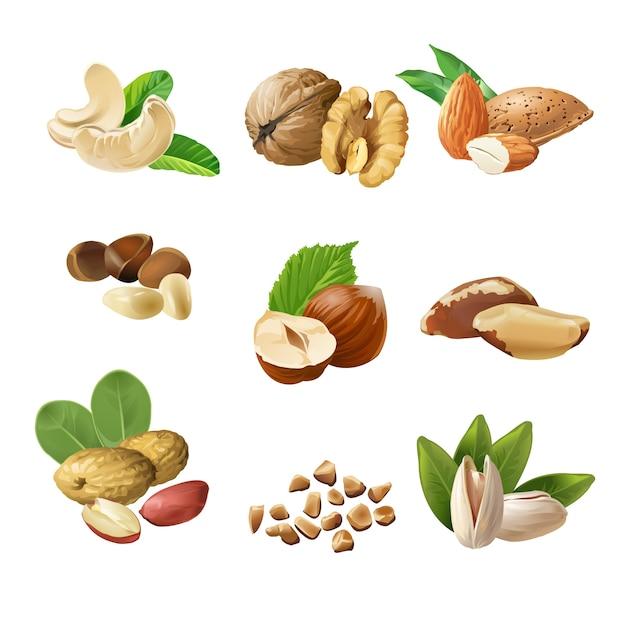 Conjunto de iconos vectoriales de frutos secos vector gratuito