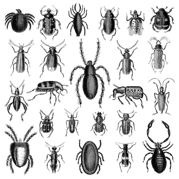 Conjunto de ilustración de varios insectos vector gratuito