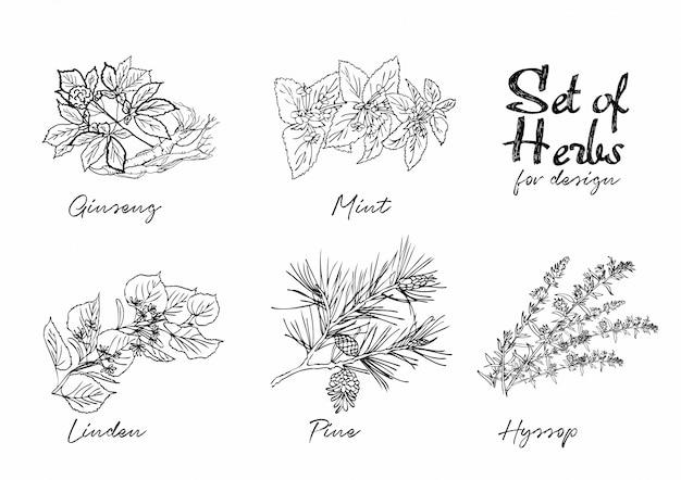 Conjunto de ilustraciones botánicas Vector Premium
