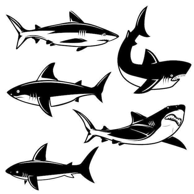 Conjunto de ilustraciones de tiburones sobre fondo blanco. elemento para logotipo, etiqueta, emblema, signo. imagen Vector Premium