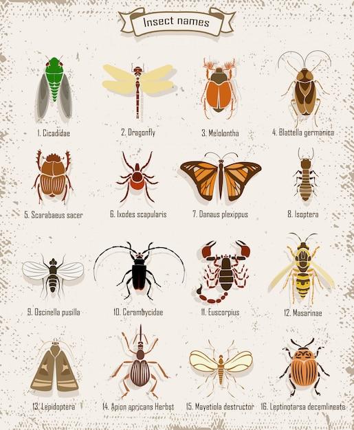 Conjunto de insectos coloridos vector gratuito