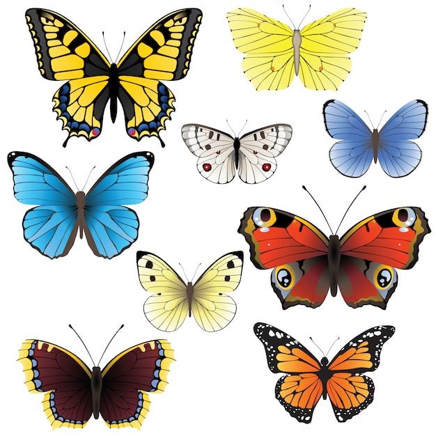 Conjunto mariposa Vector Premium