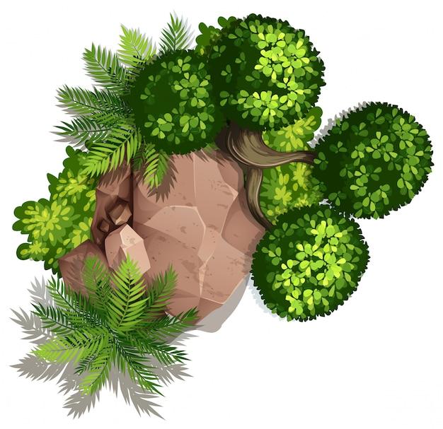 Conjunto de naturaleza rock y planta. vector gratuito
