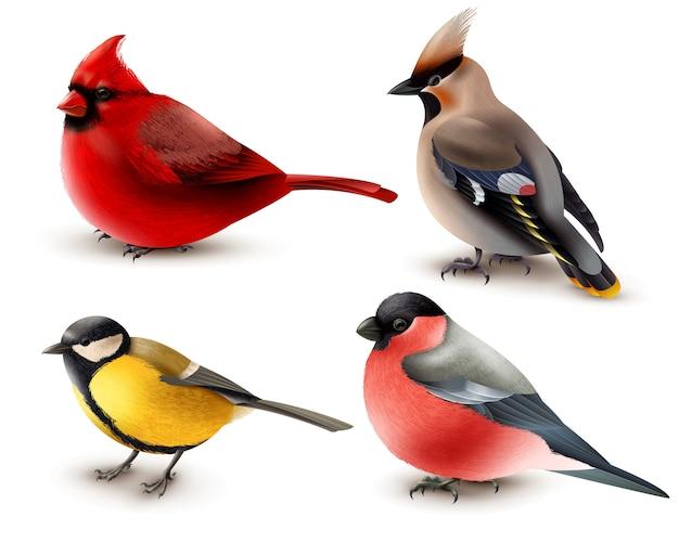 Conjunto de pájaros de invierno vector gratuito