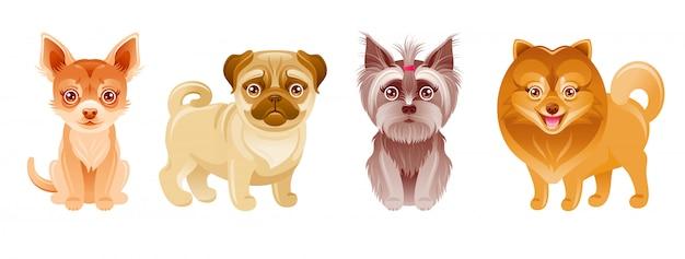 Conjunto de perros perrito. mascotas de dibujos animados icono lindo con feliz pug, chihuahua, yorkie terrier, pomerania. pequeña colección de razas. ilustración animal divertida colección de perros lindos Vector Premium