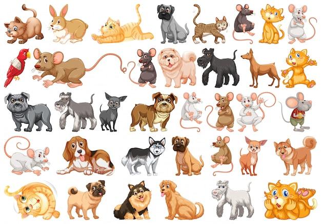 Conjunto de personaje mascota Vector Premium