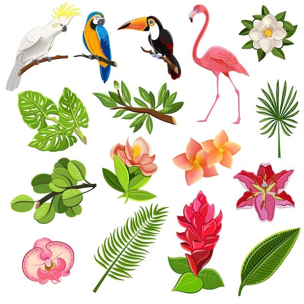 Conjunto de pictogramas de aves y plantas tropicales. vector gratuito