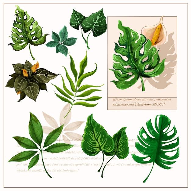 Conjunto de pictogramas de hojas tropicales verdes vector gratuito