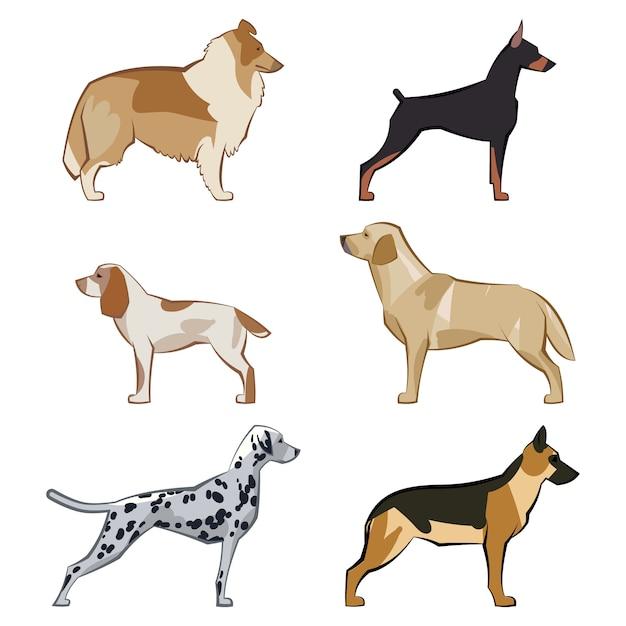 Conjunto de planos sentados o caminando lindos perros y perros de dibujos animados. razas populares. diseño de estilo plano aislado. ilustracion vectorial Vector Premium
