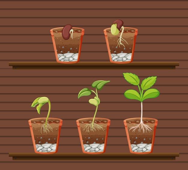 Conjunto de planta en estantes. Vector Premium