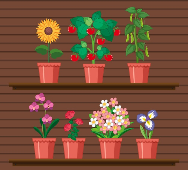 Conjunto de planta en estantes. vector gratuito