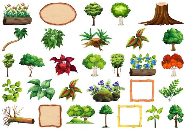 Conjunto de plantas ornamentales. vector gratuito