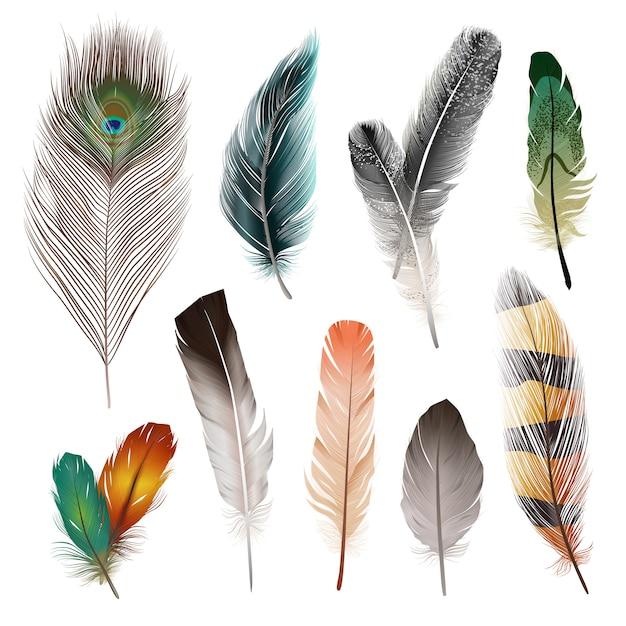 Conjunto de plumas realistas de aves. vector gratuito