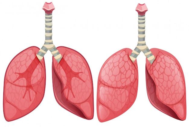Un conjunto de pulmón humano Vector Premium