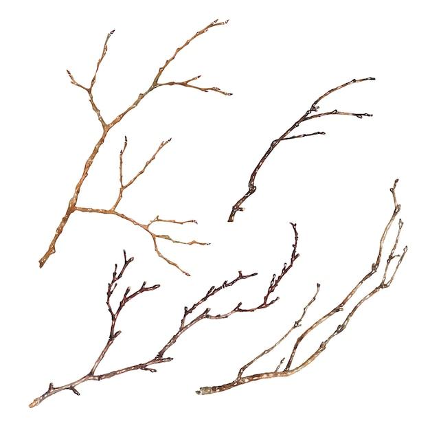 Conjunto de ramas de árbol aislado sobre fondo blanco. Vector Premium