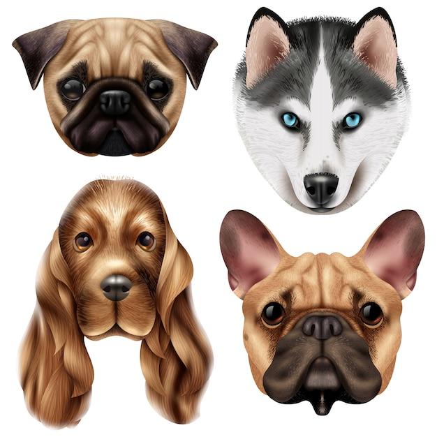 Conjunto de raza de perro realista vector gratuito