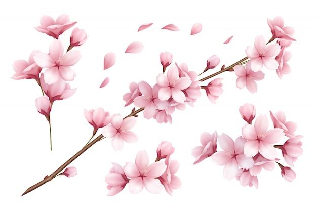 Conjunto realista de hermosas sakura ramas flores y pétalos ilustración vector gratuito