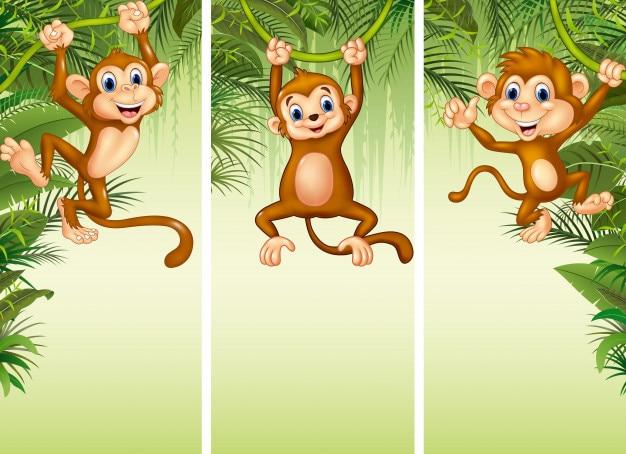 Conjunto de tres monos Vector Premium