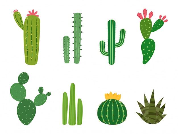Conjunto De Vectores De Colecciones De Cactus Vector Premium