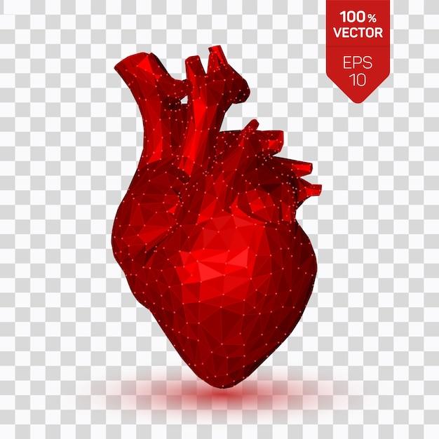 Corazón. bajo corazón humano poligonal. órgano de anatomía abstracta. Vector Premium