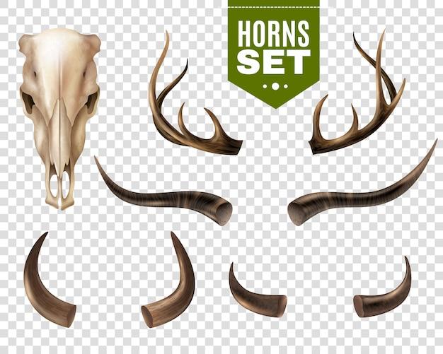 Cráneo de vaca y cuernos conjunto vector gratuito