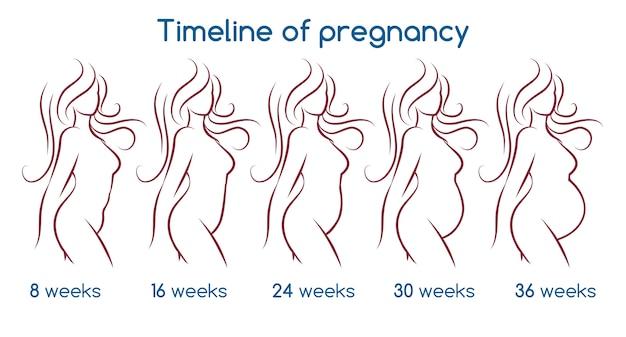 Cronología del embarazo Vector Premium