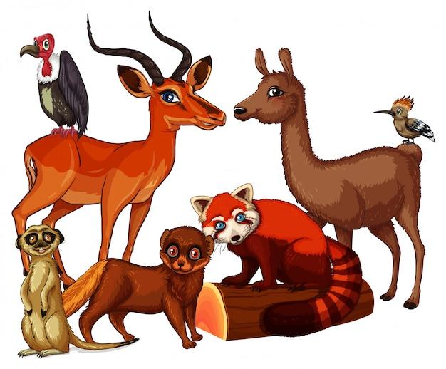 Cuadro aislado de muchos animales vector gratuito