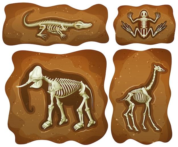 Cuatro Fósiles Diferentes Ilustración Subterránea