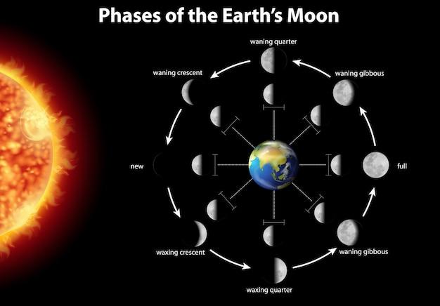 Diagrama que muestra las fases de la luna en la tierra vector gratuito