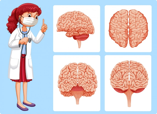 Diagramas de doctor y cerebro | Descargar Vectores Premium