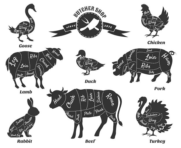 Diagramas para el juego de carnicería. vector gratuito