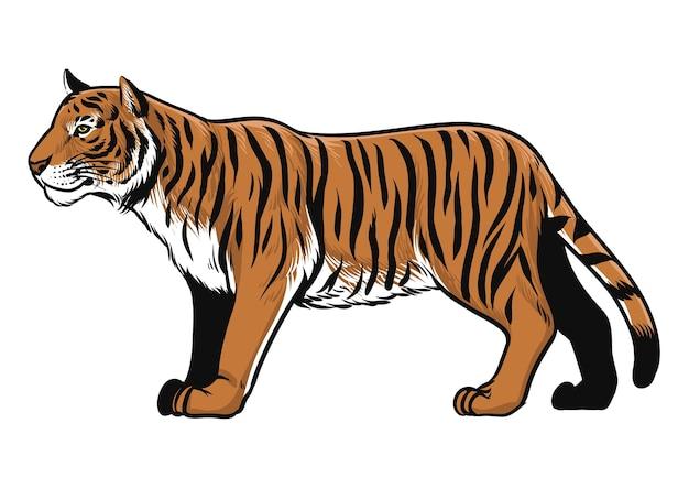 Dibujado a mano de animal tigre aislado en blanco Vector Premium
