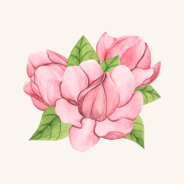 Dibujado a mano flor de magnolia platillo aislado vector gratuito