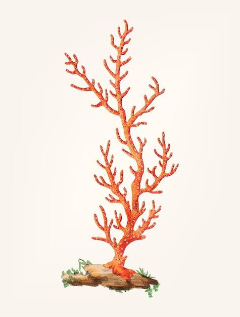 Dibujado a mano de patulous gorgonia vector gratuito