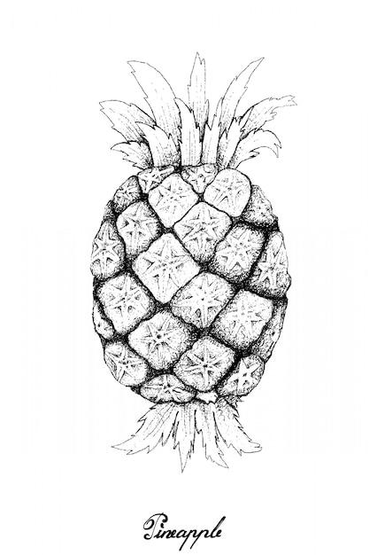 Dibujado a mano de piña orgánica dulce fresca Vector Premium
