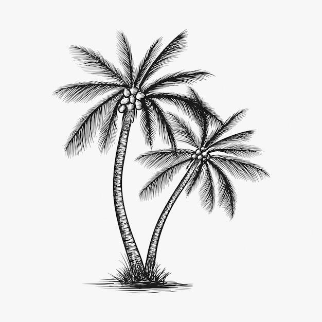 Dibujado a mano vector de árbol de coco Vector Premium