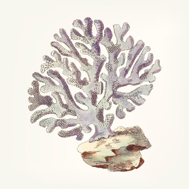 Dibujado a mano de violaceous millipore coral vector gratuito