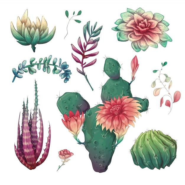 Dibujados a mano coloridos cactus y conjunto suculentos. Vector Premium