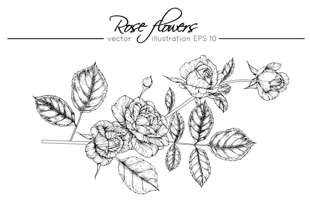 Dibujando flores color de rosa | Descargar Vectores Premium