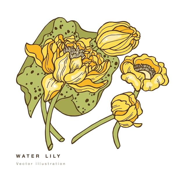 Dibujar a mano ilustración de flores de loto. tarjeta floral botánica sobre fondo blanco con lirio de agua. Vector Premium