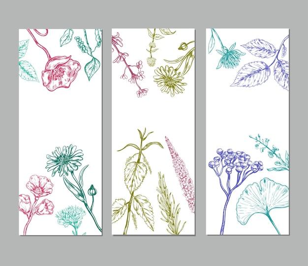 Dibuje pancartas verticales de hierbas con hierbas medicinales orgánicas valiosas para la salud humana vector gratuito