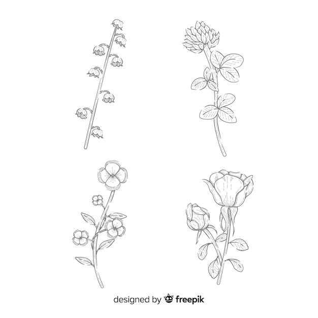 Dibujo de colección de flores realista vector gratuito