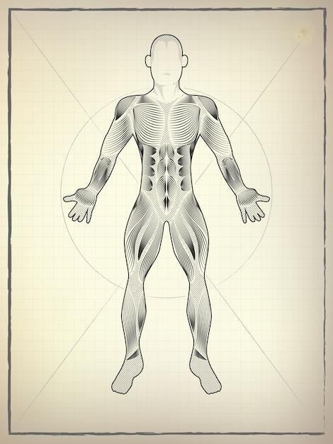 Dibujo de anatomía | Descargar Vectores Premium