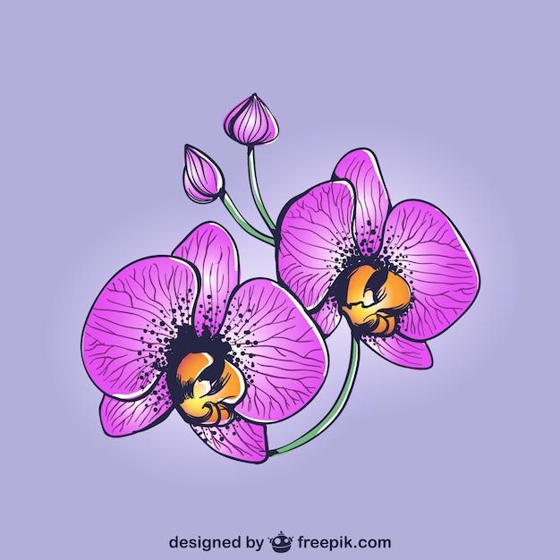 Dibujo de orquídeas moradas Vector Gratis