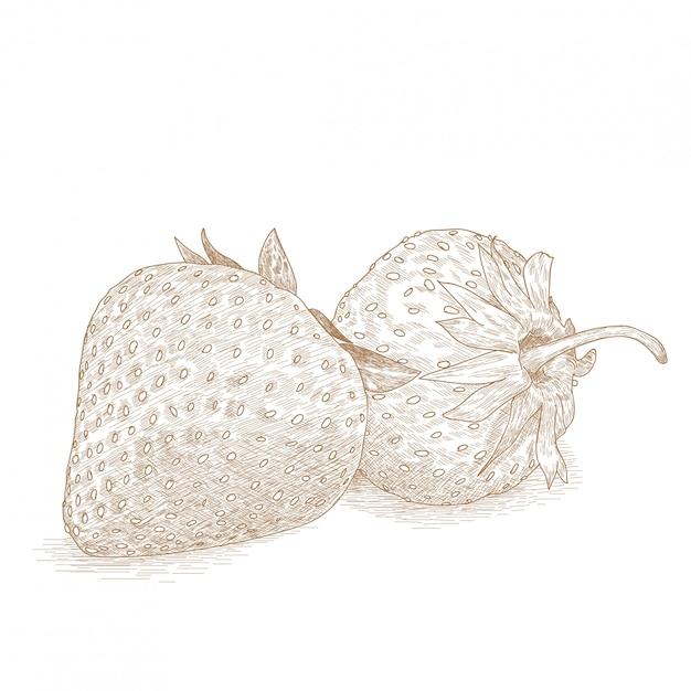 Dibujo, ilustración, de, fresa, frutas Vector Premium
