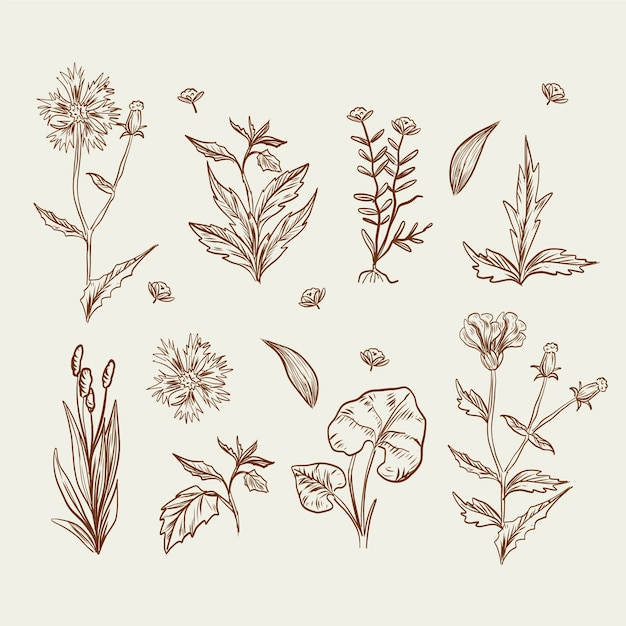 Dibujo realista con flores silvestres y hierbas. vector gratuito