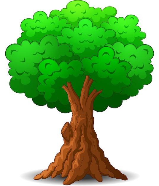Dibujos Animados De árbol Sobre Fondo Blanco Descargar Vectores