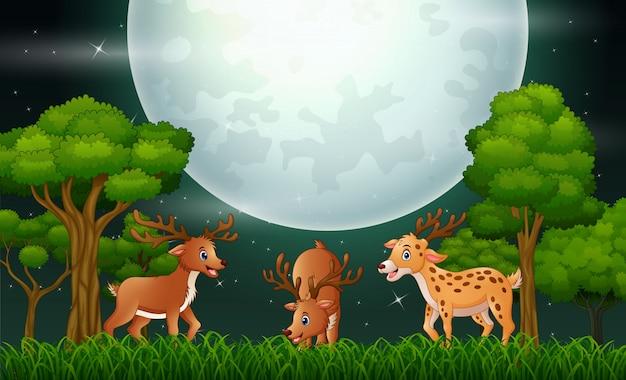 Dibujos animados de ciervos jugando en el paisaje nocturno Vector Premium