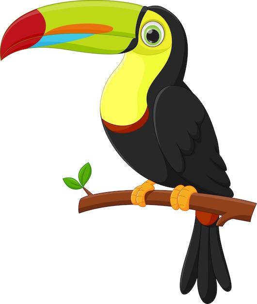 Dibujos Animados Lindo Pájaro Tucán